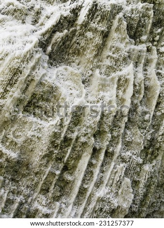 Cross-section of coral fossils on a large rock in the Florida Keys