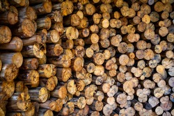 Cross-section of eucalyptus poles, stocked for use as bracing, construction scaffolding posts, house posts and for the pulp industry.
