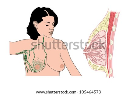 Cross section of female breast and the lymph drainage and lymph nodes of the breast and axilla