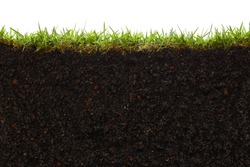 cross section of grass and soil against white background