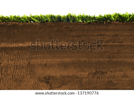 Cross section of grass on soil Stock photo ©