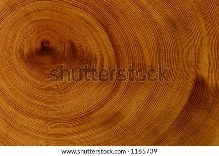 Cross section of rare Huon Pine wood, from tasmania.