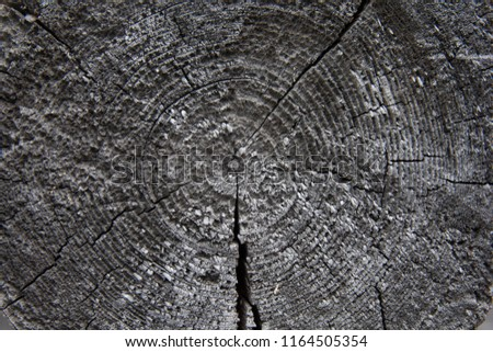 cross section of the tree #1164505354