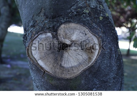 cross section of the tree #1305081538
