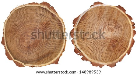 Cross section of tree trunk isolated on white background