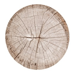 Cross section of tree trunk isolated on white background. wood texture with clipping path