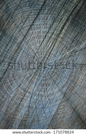 Cross section of tree trunk. Painted grey wooden annual rings.Tree rings in the trunk. Detail of annual rings of a tree trunk in the forest. A close up of the cut of a tree