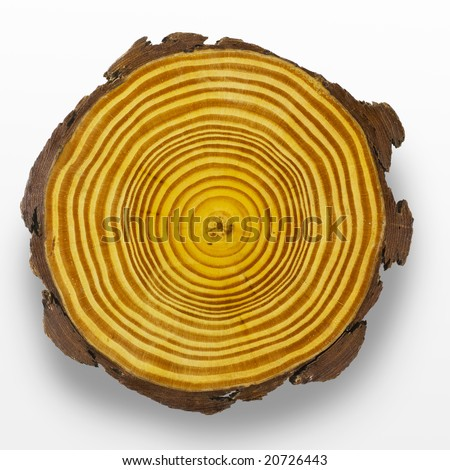 Cross section of tree trunk showing growth rings - stock photo