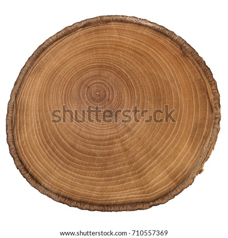 Cross section of tree trunk showing growth rings isolated on white background #710557369