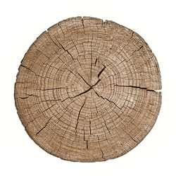 Cross section of tree trunk showing growth rings on white background. log. timber wood texture