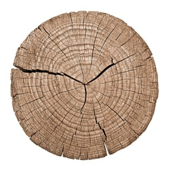 Cross section of tree trunk showing growth rings on white background. wood texture