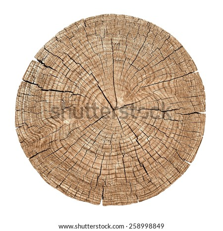 Shutterstock Cross section of tree trunk showing growth rings on white background. wood texture