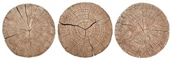 Cross section of tree trunk showing growth rings on white background. wood texture. set
