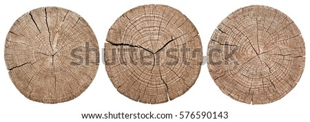 Shutterstock Cross section of tree trunk showing growth rings on white background. wood texture. set