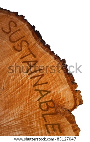Cross section of tree trunk with word 'sustainable' . White background.