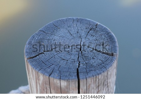 Cross section of wood #1251446092