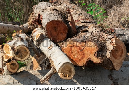 Cross sectional image of the timbers or logs stacked in the outdoors for transportation and processing into wooden furniture components #1303433317