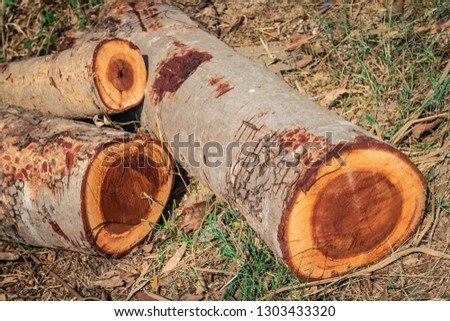 Cross sectional image of the timbers or logs stacked in the outdoors for transportation and processing into wooden furniture components #1303433320