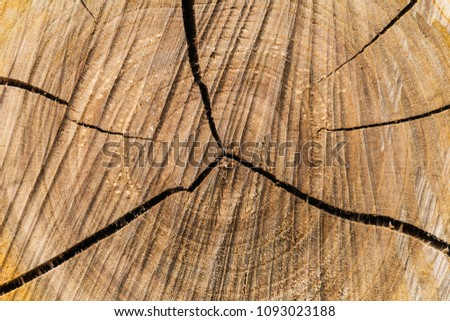 Cross-sectional view of a log cut end wooden texture #1093023188