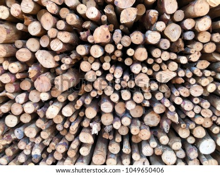 Cross sectional  wooden background and texture for copy space  #1049650406