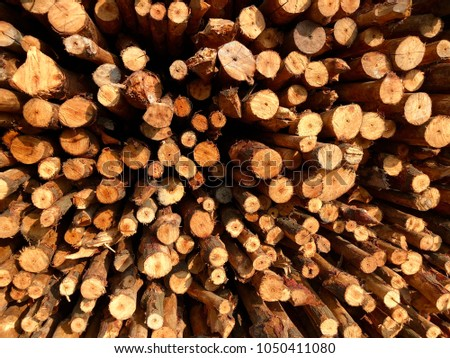 Cross sectional  wooden background and texture for copy space  #1050411080