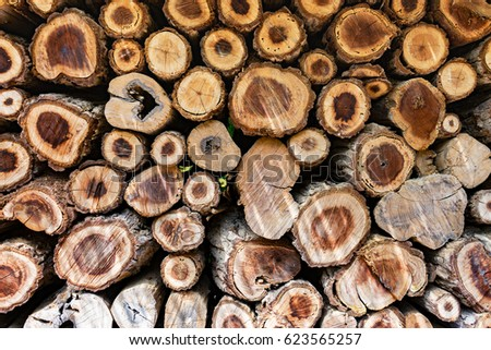 Cross Sectional Wooden Background,Different sections of the tree.Pile of chopped fire wood prepared for winterCutting wood is arrange to be the natural wall at farm in Thailand,selective focus #623565257