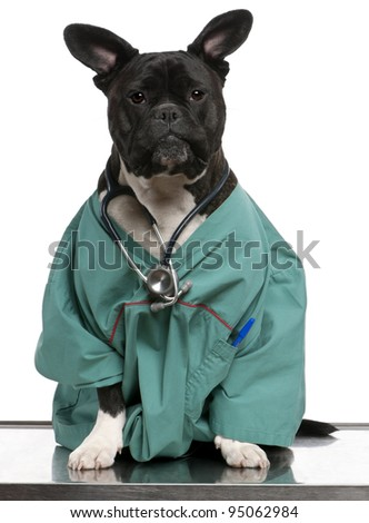 Crossbreed dog, dog dressed in a doctor coat and wearing a stethoscope against a white background