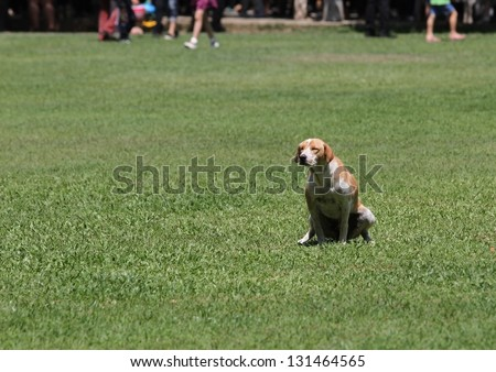 crossbreed dog peeing on grass