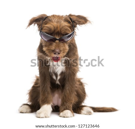 Crossbreed, 5 months old, sitting and wearing sunglasses against white background