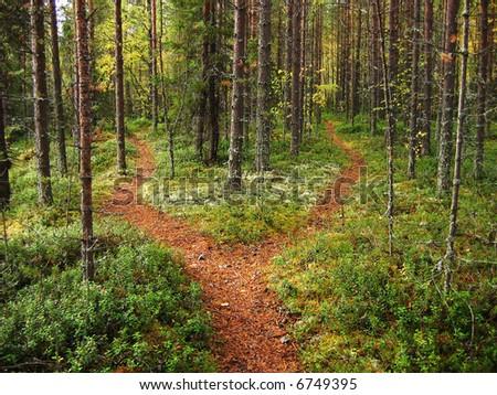 Crossroads in the Karelian forest