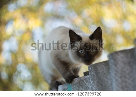 crouching on the fence