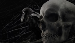 Crow and skull composition. Photo of a black and white black crow sitting with human skull close up composition with branch background pattern.
