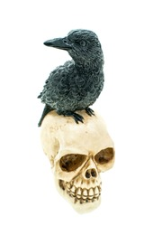 Crow Bird on the Human Skull of death