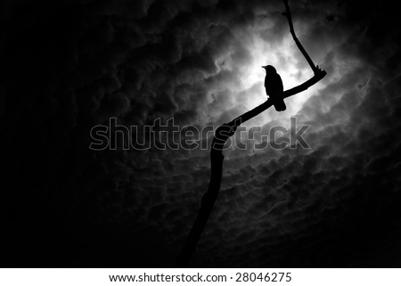 Crow on a barren branch in Death Valley, California