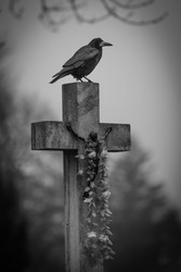 crow on cross
