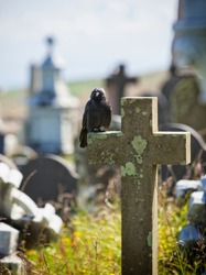 Crow or raven sitting on tombstone at cemetery
