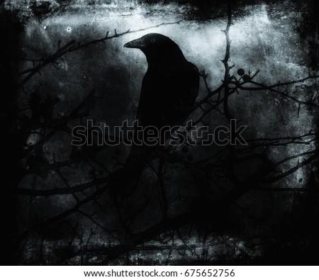crow sit on dead tree trunk....