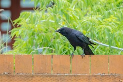 Crow sitting on the fence