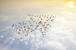 Crowd of birds flying on sky arrow shape , growth development progress success business team work concept , nature art abstract background