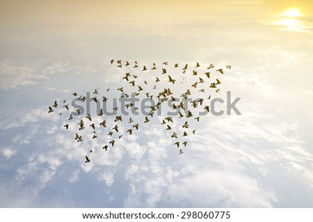 Crowd of birds flying on sky arrow shape , growth development progress success business team work concept , nature art abstract background #298060775