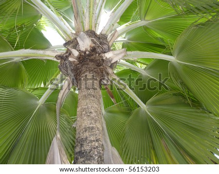 Crown of a palm