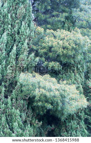 Crown of evergreen trees #1368415988