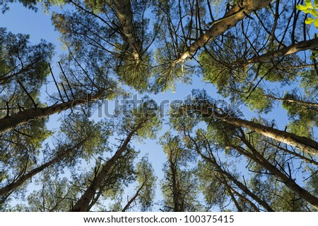 crown of high green trees against the blue sky #100375415