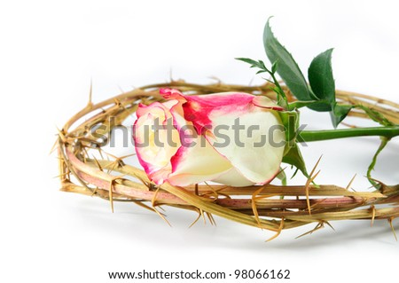 crown of thorns and rose isolated on white background