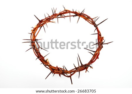 crown of thorns isolated on white background