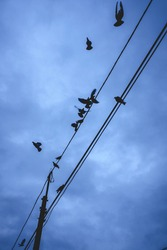 Crows and pigeons in electricity wires at Tokyo in the end of the night at morning