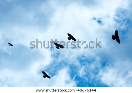 Crows flying against cloudy blue sky
