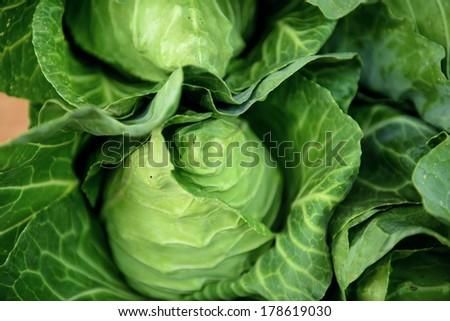Cruciferous vegetables fresh. #178619030