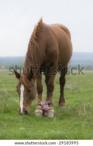 cruelty over animal horse