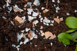 Crushed egg shells in the garden
